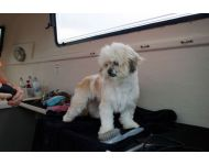 dog-grooming-service 045