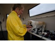 dog-grooming-service 075