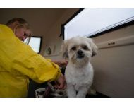 dog-grooming-service 078