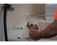 dog-grooming-service 011