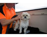 dog-grooming-service 035