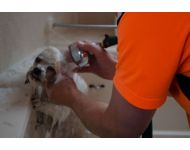 dog-grooming-service 008