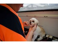 dog-grooming-service 081