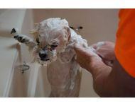 dog-grooming-service 012