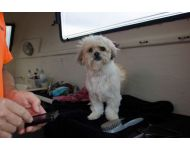 dog-grooming-service 046