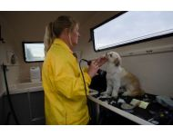 dog-grooming-service 074