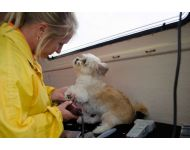 dog-grooming-service 050