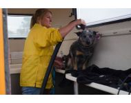 dog-grooming-service 108
