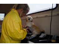 dog-grooming-service 049