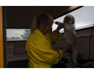 dog-grooming-service 061