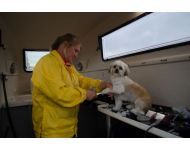 dog-grooming-service 076